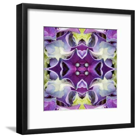 Hydrangea-Rose Anne Colavito-Framed Art Print