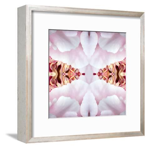 Peony Flame-Rose Anne Colavito-Framed Art Print