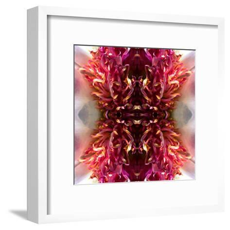 Peony Frizzle-Rose Anne Colavito-Framed Art Print