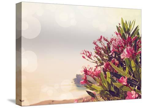 Flowers in Paradise II-Sylvia Coomes-Stretched Canvas Print