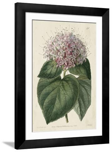 Imperial Floral IV-Vision Studio-Framed Art Print