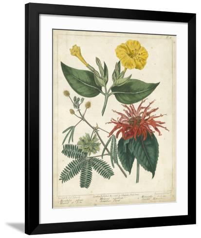 Summer Beauties I-Sydenham Edwards-Framed Art Print