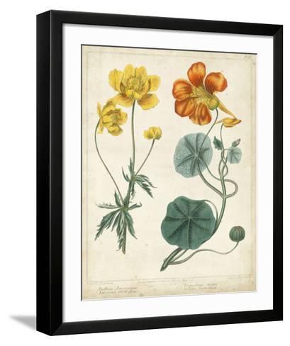 Summer Beauties II-Sydenham Edwards-Framed Art Print