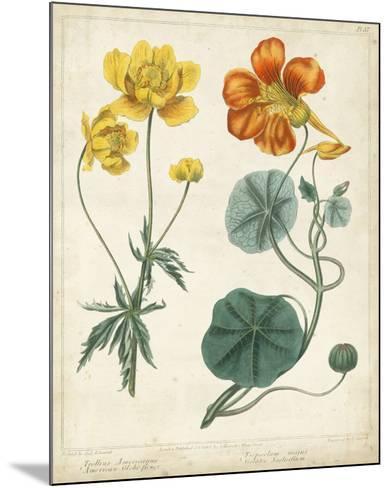 Summer Beauties II-Sydenham Edwards-Mounted Giclee Print