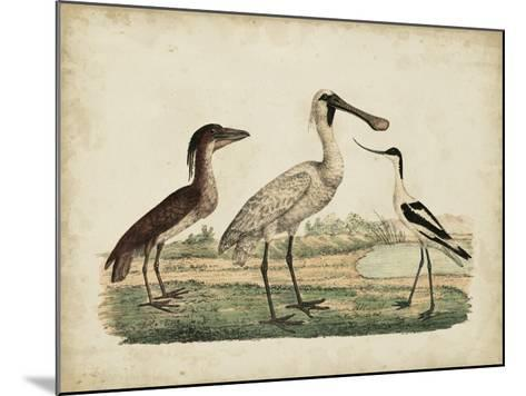 Avocet & Boat-Billed Heron-Friedrich Strack-Mounted Giclee Print