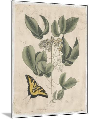 Embellished Catesby Butterfly & Botanical II-Mark Catesby-Mounted Art Print