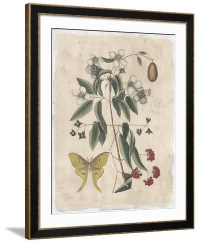 Embellished Catesby Butterfly & Botanical III-Mark Catesby-Framed Art Print