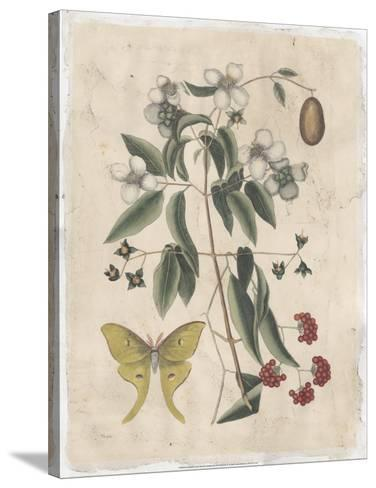 Embellished Catesby Butterfly & Botanical III-Mark Catesby-Stretched Canvas Print
