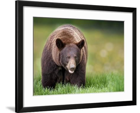 Bears at Play III-PHBurchett-Framed Art Print