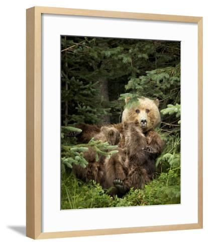 Bears at Play IV-PHBurchett-Framed Art Print