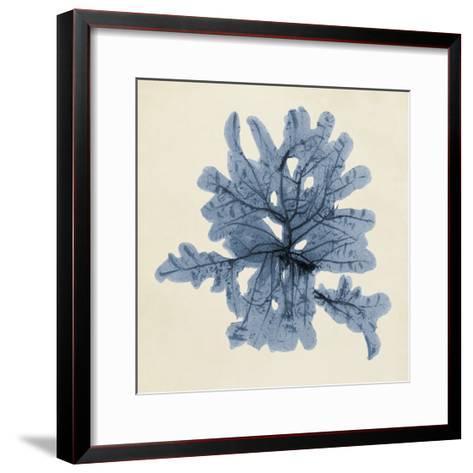 Coastal Seaweed IV-Vision Studio-Framed Art Print