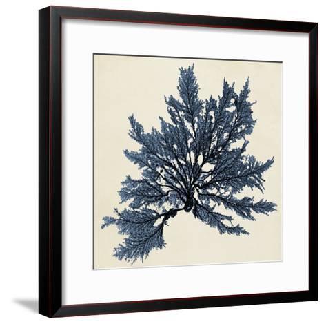 Coastal Seaweed IX-Vision Studio-Framed Art Print