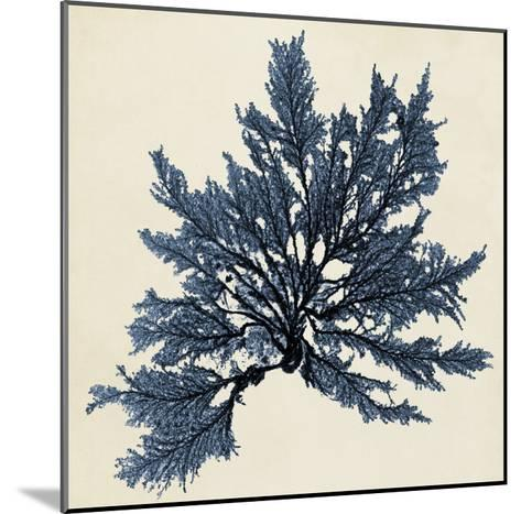 Coastal Seaweed IX-Vision Studio-Mounted Giclee Print