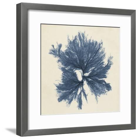 Coastal Seaweed V-Vision Studio-Framed Art Print