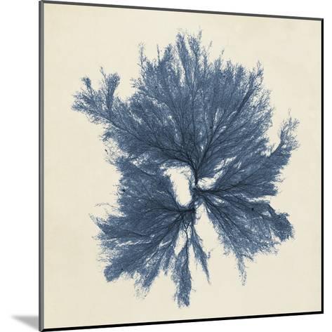 Coastal Seaweed V-Vision Studio-Mounted Giclee Print