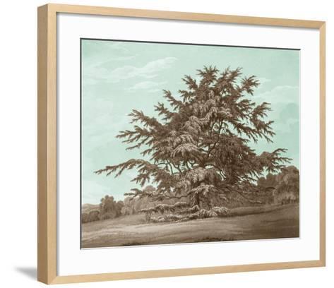 Serene Trees VI-Edward Kennion-Framed Art Print