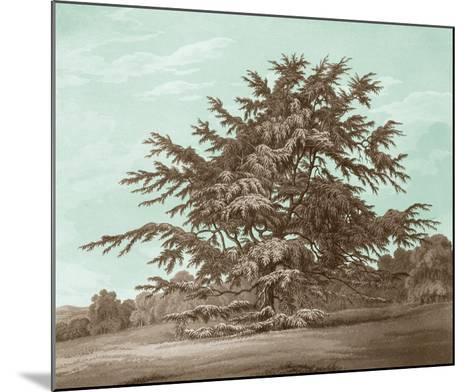 Serene Trees VI-Edward Kennion-Mounted Giclee Print