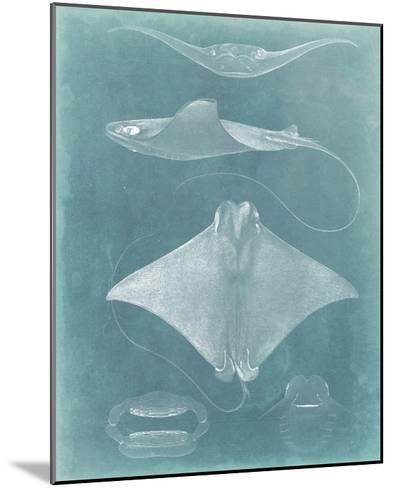 Morning Swim II-Vision Studio-Mounted Giclee Print
