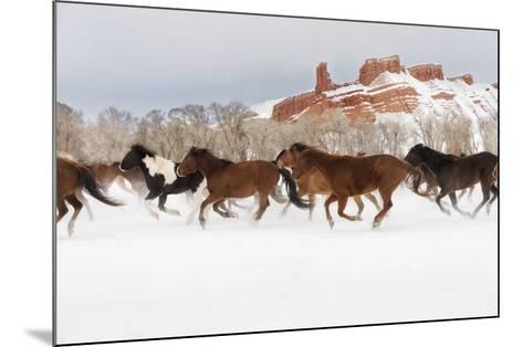 Snow Run III-PHBurchett-Mounted Art Print