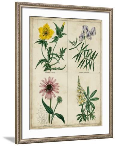 Botanical Grid IV-Benjamin Maund-Framed Art Print