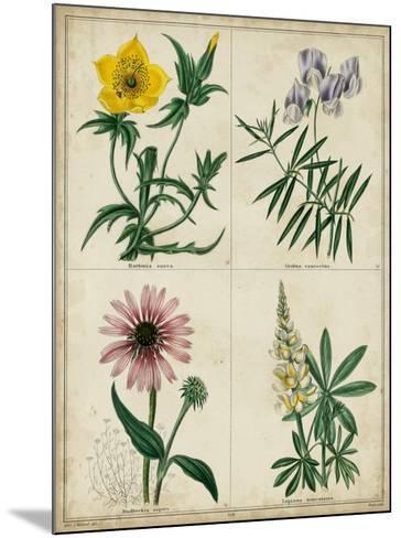 Botanical Grid IV-Benjamin Maund-Mounted Giclee Print