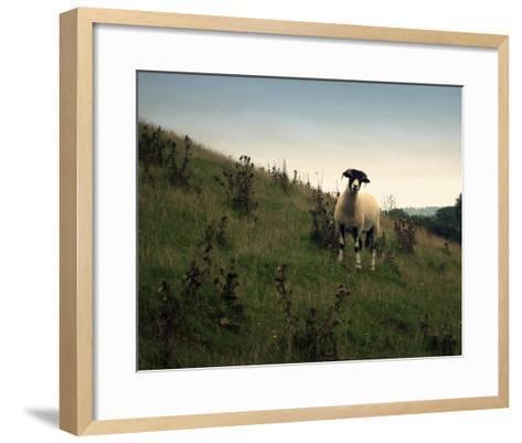 Wooly Friends II-Lillian Bell-Framed Art Print