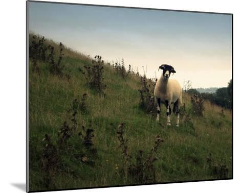 Wooly Friends II-Lillian Bell-Mounted Giclee Print