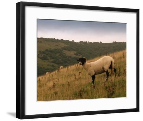 Wooly Friends III-Lillian Bell-Framed Art Print