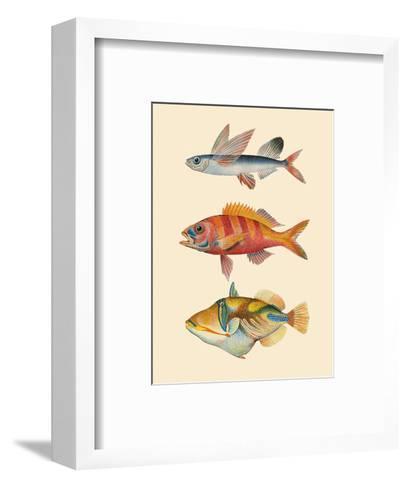 Fish of Hawaii Triptych - Flying Fish , Hawaiian Ruby Snapper Onaga , Reef Triggerfish-Pacifica Island Art-Framed Art Print