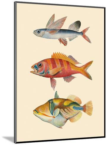 Fish of Hawaii Triptych - Flying Fish , Hawaiian Ruby Snapper Onaga , Reef Triggerfish-Pacifica Island Art-Mounted Art Print