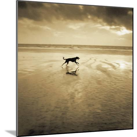 Dog on the Beach, West Wittering-Jo Crowther-Mounted Giclee Print