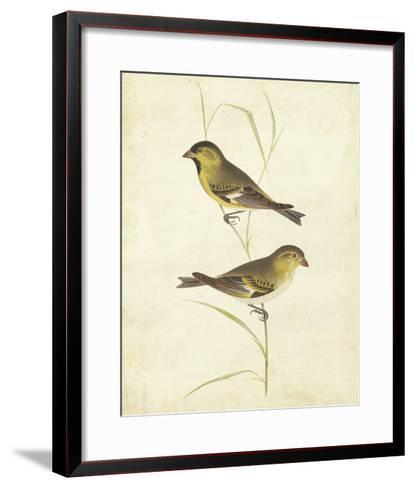 Goldfinch-Cassin-Framed Art Print