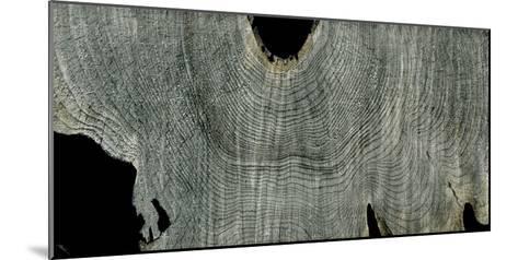 Gray Ghost II-John Butler-Mounted Giclee Print