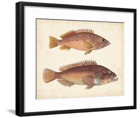 Antique Fish Species I--Framed Art Print