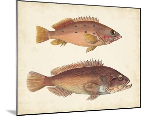 Antique Fish Species I--Mounted Giclee Print