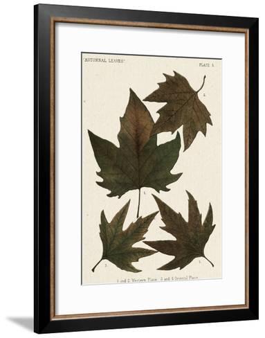 Autumnal Leaves IV-Vision Studio-Framed Art Print