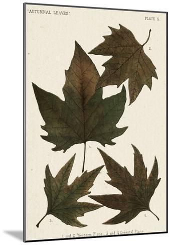 Autumnal Leaves IV-Vision Studio-Mounted Giclee Print
