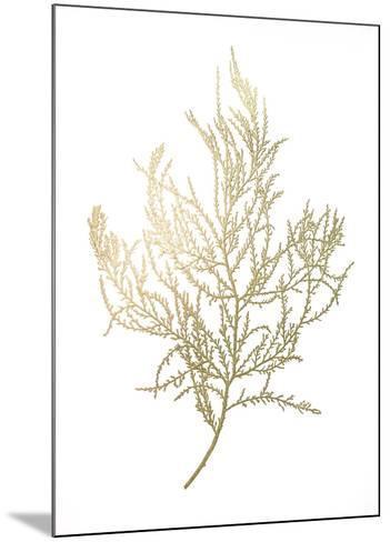 Gold Foil Algae III-Jennifer Goldberger-Mounted Art Print
