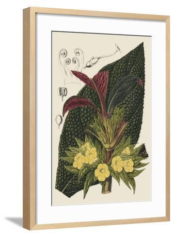Begonia Varieties II-Stroobant-Framed Art Print