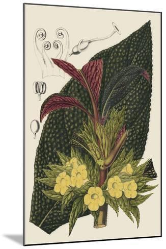 Begonia Varieties II-Stroobant-Mounted Giclee Print