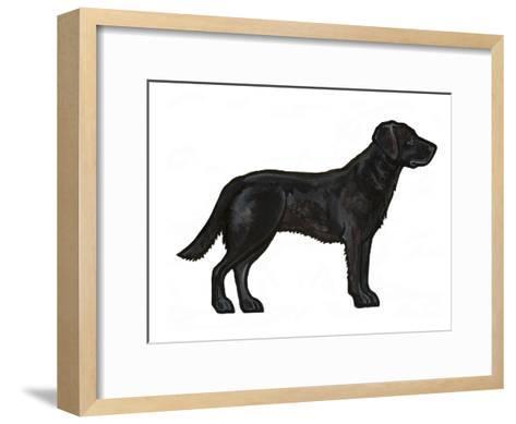 Black Lab-Sally Pattrick-Framed Art Print