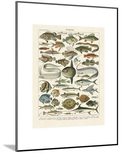 Poissons I-Adolphe Millot-Mounted Art Print