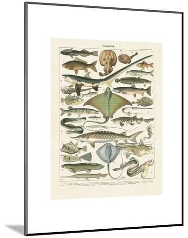 Poissons II-Adolphe Millot-Mounted Art Print