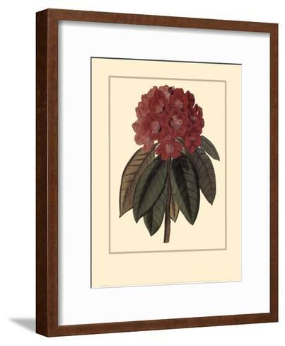Rhododendron Rojo-Rafael Landea-Framed Art Print