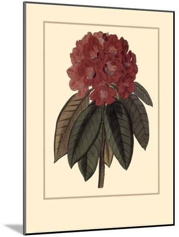 Rhododendron Rojo-Rafael Landea-Mounted Art Print