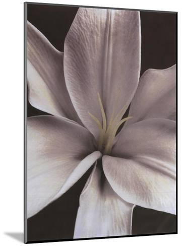 Lily II-Dianne Poinski-Mounted Art Print