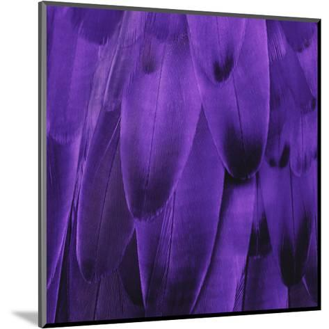 Feathered Friend - Purple-Julia Bosco-Mounted Giclee Print