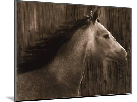 Buckskin-Robert Dawson-Mounted Art Print
