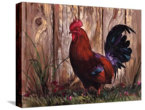 Bantie Rooster-Nenad Mirkovich-Stretched Canvas Print