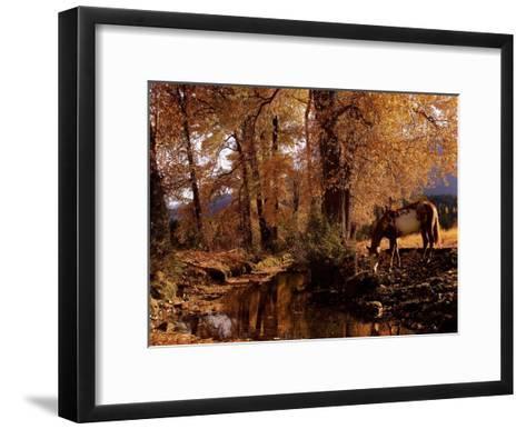 Fall Colors-Robert Dawson-Framed Art Print